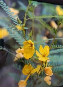 Weed Flower, Mac Harris