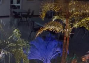 Purple Palm, Mac Harris