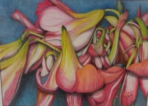 Blush of Lilies, Gerri Schwenkler Pennington