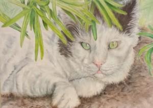 """Buddy, My Japanese Bobtail Cat, Carol """"C.J."""" Wilkes"""
